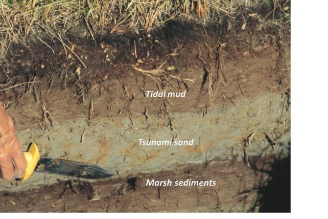 Layers of exposed tidal mud, tsunami sand and marsh sediments