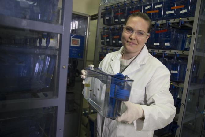 A researcher holds an aquarium containing zebrafish