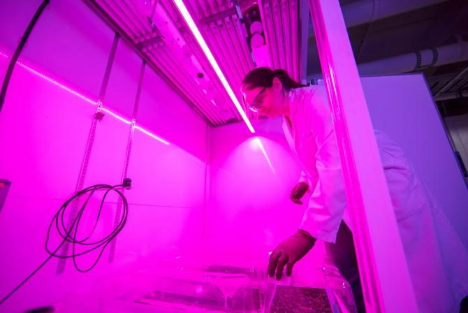 Researcher operates research infrastructure under purple light