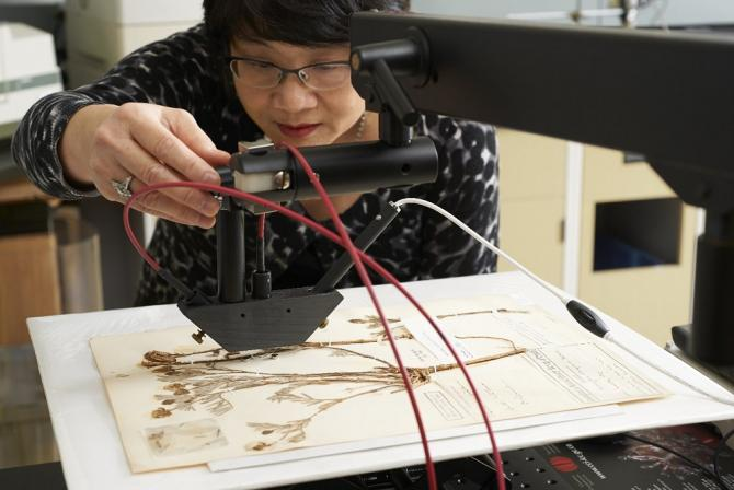 Scientist adjusting the Microfade tester over dried plant samples on a sheet of paper