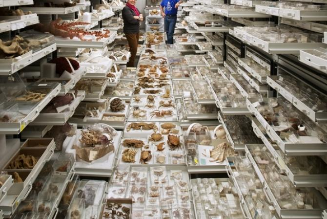 Two people surrounded by trays of specimens