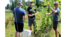Researchers in the field examine plants with green leaves