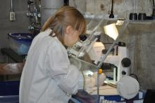 Researcher uses a microscope to examine a sample